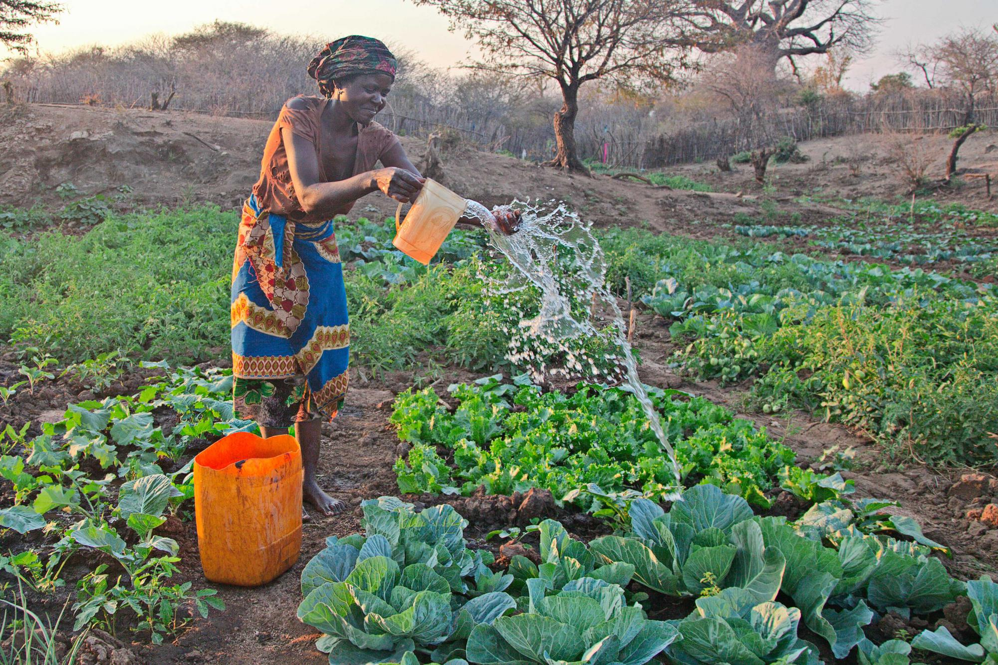 Standing in her field with bucket made from a 5 gallon drun, Lydia Pensar waters her garden by flinging water from a jug.