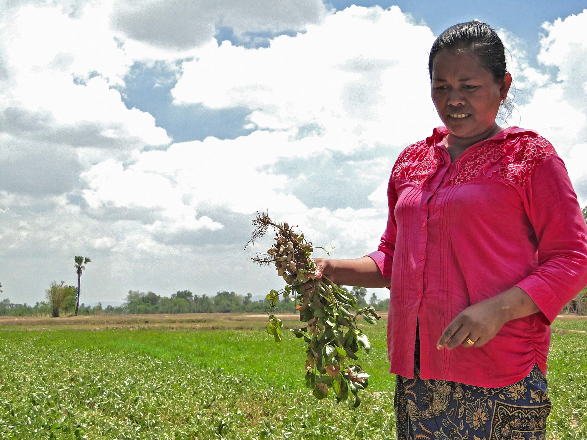 Mom Chhoeun stands a a field holding peanuts freshly harvested