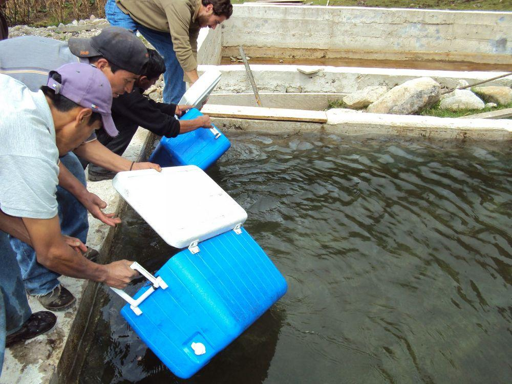 """<span class=""""photo-caption"""">One of the projects supported by the Vega del Volcan Cooperative, also based in Sibinal, San Marcos Diocese, is a trout hatchery.</span><span class=""""photo-credit"""">Photo courtesy of Juan Pablo Morales</span>"""