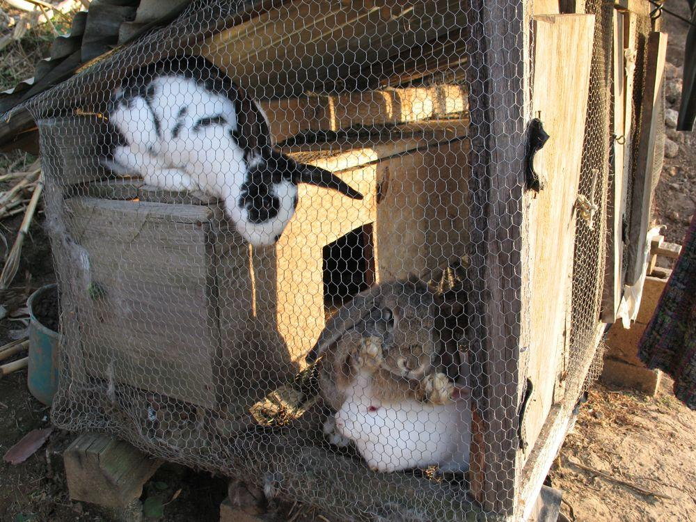 """<span class=""""photo-caption"""">As a member of Project Harvest, María Yat received training and materials to raise rabbits for consumption and for income. Rabbit manure is used as organic compost to fertilize her family's garden.</span><span class=""""photo-credit"""">Photo courtesy of Paul Lemieux</span>"""