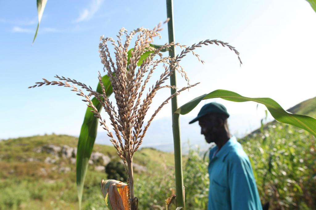 """<span class=""""photo-caption"""">Farmers such as Vénance Calixte benefited from an MCC-supported cash-for-work program to build soil conservation walls. """"This kind of project helps us live better out here,"""" he says. """"Where other people have gone to bigger cities to look for work, we've been able to stay here.""""</span><span class=""""photo-credit"""">MCC Photo/Ben Depp</span>"""