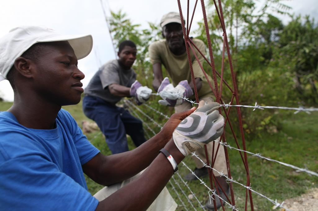 """<span class=""""photo-caption"""">Camille Richemond, left, Charles Elizair, center, and Delcus Benito, right, put up barbed wire to contain goats on land used by an MCC-supported vocational school that teaches agriculture and animal rearing to students in Desarmes, Haiti.</span><span class=""""photo-credit"""">MCC Phot/Ben Depp</span>"""