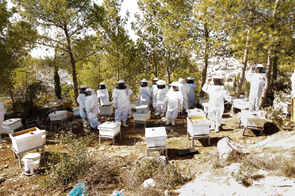 """<span class=""""photo-caption"""">Beekeeping training is giving members of a women's agricultural cooperative in the West Bank the opportunity to improve their livelihoods. This MCC-supported training is provided by MCC partner organization Applied Research Institute, Jerusalem.</span><span class=""""photo-credit"""">MCC Photo/Ryan Rodrick Beiler</span>"""