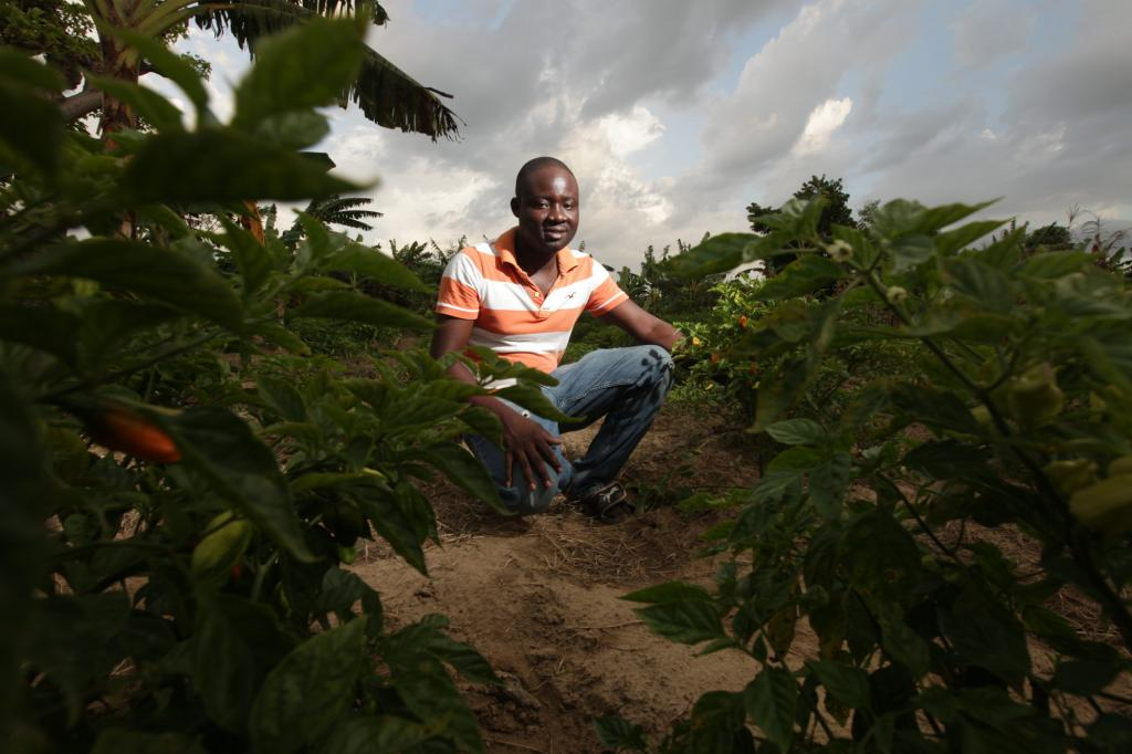 """<span class=""""photo-caption"""">Dickson Dosthenes is transforming a typical harvest of chili peppers, common in Haitian cuisine, into a money-making opportunity. """"Farmers don't usually keep track of what's going on the in the marketplace."""" In school, though, he learned to plan around what would be most profitable. Realizing farmers traditionally harvested peppers in October, he planted early and harvested in August, when it's rare to have peppers. At market, he was surrounded by eager buyers.</span><span class=""""photo-credit"""">Silas Crews</span>"""