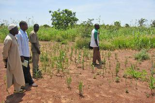 During a visit of MCC partner Development Office of Evangelical Churches (ODE) in Kwon, Burkina Faso, ODE representative Solomon Sangla, right, examines a drought-affected field.