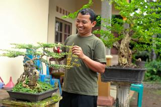 Yunarso Rusandono trims a bonsai tree in his front garden