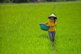 A women walks wearing a straw hat walks in a field carrying a large plastic tub.