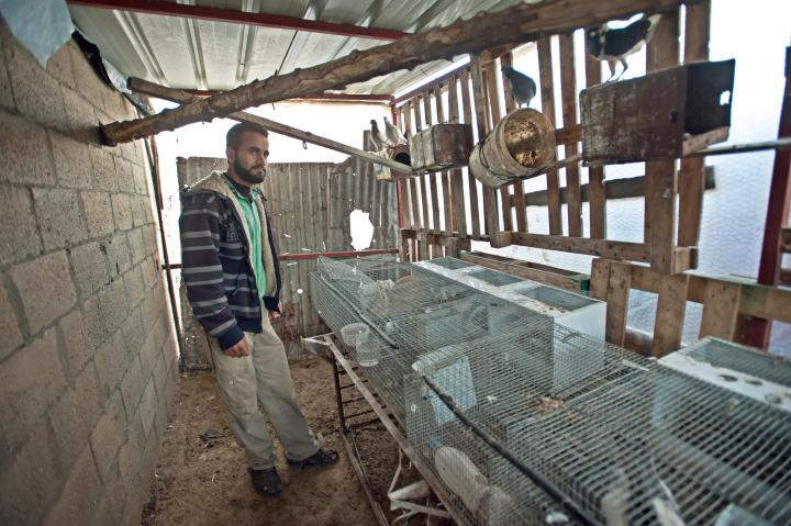 Raising rabbits for food and income