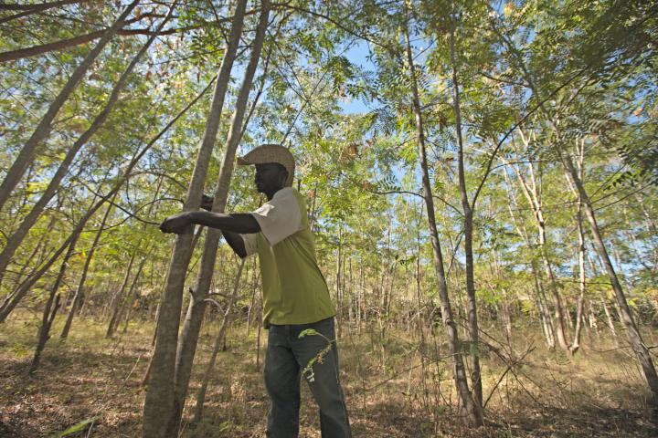 Haiti forest