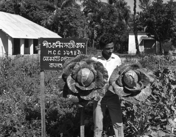 By 1975, vegetables that MCC introduced, including cabbage, were becoming more common in Bangladesh's Noakhali district. Sirajuddowla, a longtime MCC worker who uses one name only, displays cabbage grown during the dry season. MCC encouraged farmers to grow vegetables, wheat and sorghum in the dry season when farmers can't grow rice.