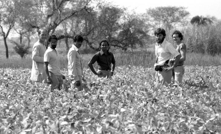 """Soybeans, another crop that MCC introduced, are now commonly sown throughout coastal areas – a visible reminder of MCC's legacy in Bangladesh. This 1982 photo taken in a soybean field shows MCC workers (from left) Russ Toevs of Whitewater, Kan.; Derek D'Silva of Sonapur, Bang.; Abdul Mannan and Khabirul Islam Khokon of Noakhali district, Bang.; Paul Shires of Arroyo Grande, Calif.; and Lee Brockmueller of Freeman, S.D. <a href=""""http://acommonplace.mcc.org/acp/2013/04_07/feature_story_02.html"""">Read more</a> in the spring issue of <em>A Common Place</em>magazine."""
