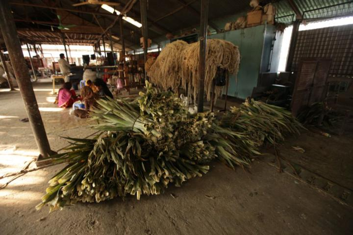 Bundles of pineapple leaves are stacked for processing. Custom machinery was developed, starting in 2007, to turn the various plant leaves into fiber. Bangladesh is one of few countries producing material out of these exotic fibers.