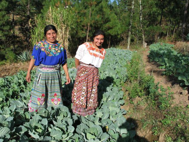 """Project Harvest participants María Victoria Castro, right, and her sister Ana Castro stand in one of their 10 irrigated terraces. In just one terrace, the sisters produced 175 cabbages. """"At first we need to go to the market every week to buy vegetables that the family needs for our own consumption,"""" María Victoria Castro said. Now with the benefit of this project they do not need to go to the market very often. Instead more families come to them to buy the vegetables that they need."""