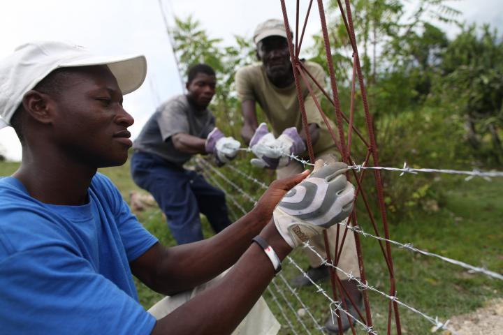 Camille Richemond, left, Charles Elizair, center, and Delcus Benito, right, put up barbed wire to contain goats on land used by an MCC-supported vocational school that teaches agriculture and animal rearing to students in Desarmes, Haiti.