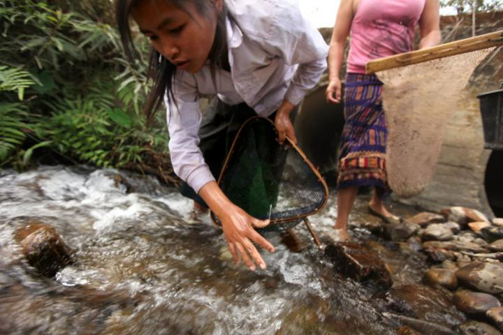 La uses a net to capture fish and frogs as she turns over stones in a small stream. In an area where meat is too expensive for families to buy often, if at all, teachers encourage students to take advantage of free sources of protein, including what they can catch with nets.