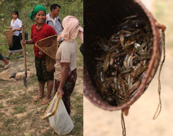 Going out to gather food from streams, or from fields and the forest, is a traditional part of the rural Lao diet that MCC educators are stressing. Moun, left, and Wan visit as they leave a nearby stream to walk back to the village. Frogs, crickets, freshwater crabs, snails, rodents and fish such as these in the basket provide important nutrients often lacking in rice-based meals.