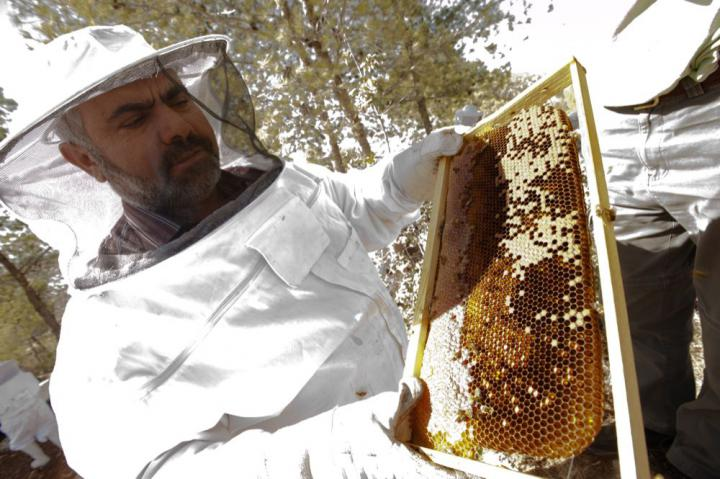 Ayed Abdel Azil, a research associate for Applied Research Institute, Jerusalem, leads training sessions on beekeeping for a women's agricultural cooperative in the West Bank.