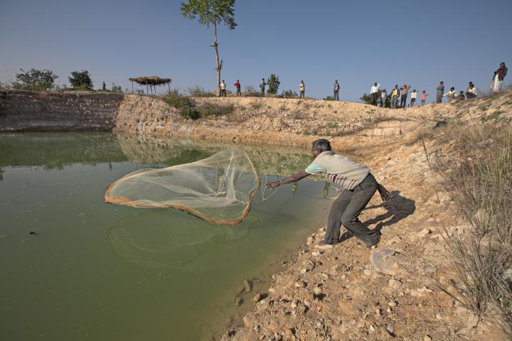 Marwar Orao throws a fishing net into one of five ponds built through an MCC-supported food-for-work project in India's Jharkhand state. Ponds are vital for irrigation and can be used to raise fish, one more way that this MCC-supported effort of Mennonite Christian Service Fellowship of India, a service organization of Indian Mennonite and Brethren in Christ churches, is helping to improve the lives of farmers.