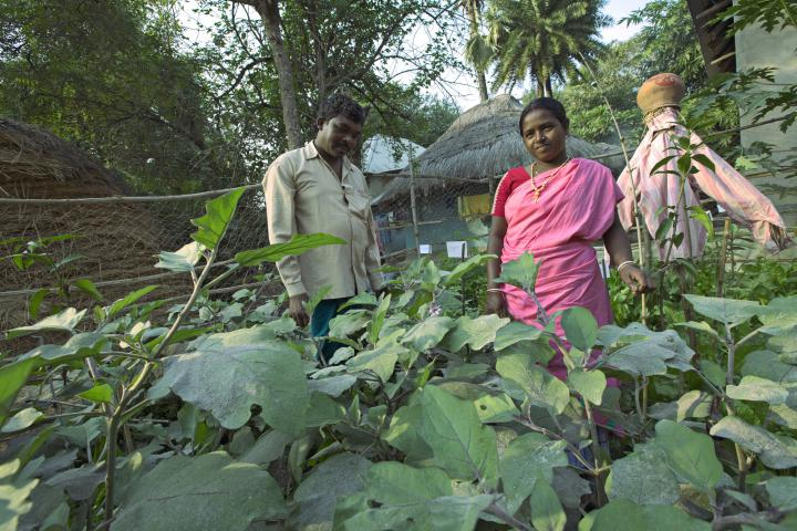 Through an MCC project with ABSK, more than 50 families have established kitchen gardens, growing nutritious vegetables such as cabbage, eggplant and pumpkin. Bhim Hansda, a field worker for ABSK, and his wife Monica Hansda, a member of a local women's group, stand in their kitchen garden in the village of Domdama. This project, supported through MCC's account at the Canadian Foodgrains Bank, also trains farmers in worm composting and seed preservation.