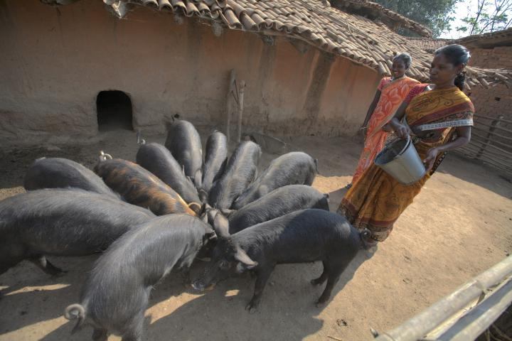 Through MCC's partnership with SVWST, a women's group in the village of Rurungkocha learned of a local government program that helped them begin to raise pigs, bringing new opportunity to group members such as Magdali Toppo, right, and Jacinta Tika.