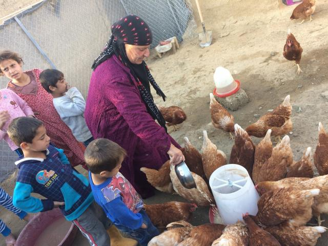 Image: Hamda, whose last name is withheld for security reasons, has farmed chickens since September 2017 with support from MCC partner Zakho Small Villages Project (ZSVP) and MCC's account at the Canadian Foodgrains Bank.The project provides agricultural livelihoods that promote food security and home-based sources of income for 730 extremely vulnerable families. MCC photo/Sheldon C. Good