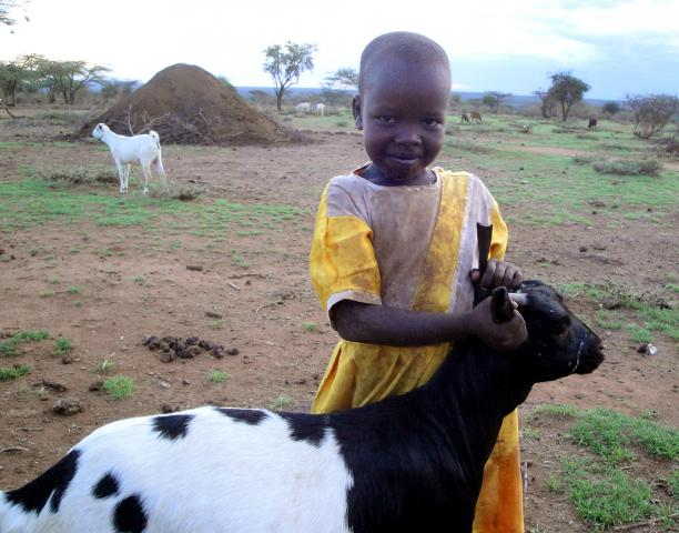 Toyia Sekento, 6, holds a goat that her family is raising. Her family received the goat because her father is part the Najile, Kenya, self-help group, supported by Mennonite Central Committee. The goats are an incentive for the formation of 60 self-help groups among the Maasai people in Kenya who each work together to do community projects.